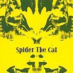 Spider The Cat Spider The Cat