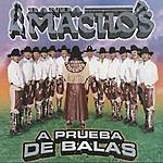 Banda Machos A Prueba De Balas
