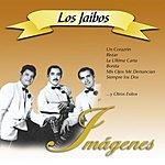 Los Jaibos Imagenes: Los Jaibos
