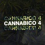Robert Randolph & The Family Band I Need More Love