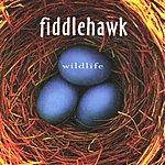 Fiddlehawk Wildlife