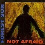 Forest Sun Not Afraid