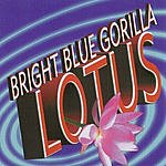 Bright Blue Gorilla Lotus