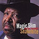 Magic Slim & The Teardrops Snakebite