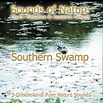 Suzanne Doucet Southern Swamp