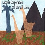 Laconia Corporation Still Life With Llamas