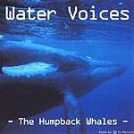 Roar Skau Olsen Water Voices: The Humpback Whales