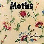 Moths Lepid Opera
