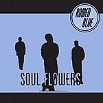 Romeo Blue Soul Flowers