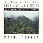 Ruth Happel The Atmosphere Collection: A Month In The Brazilian Rainforest