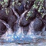 Susan Mazer The Healing Rain Forest: Water
