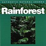 Natural Sounds Rainforest