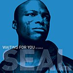 Seal Waiting For You