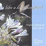 Dale Harris Like A Hummingbird