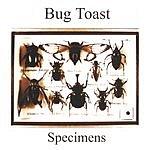 Bug Toast Specimens