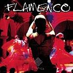 Bruno Gennaro Flamenco Guitar