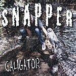 Caligator Snapper