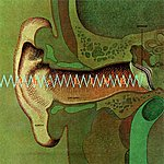 The Line Auricle