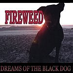 Fireweed Dreams Of The Black Dog