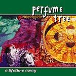 Perfume Tree A Lifetime Away