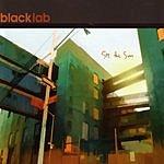 Black Lab See The Sun