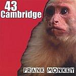 43 Cambridge Prank Monkey