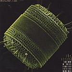 The Strand Diatom