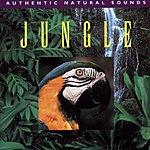Natural Sounds Jungle