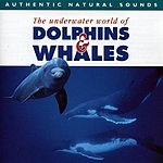 Natural Sounds Dolphins & Whales