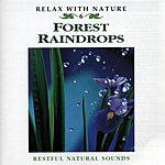 Natural Sounds Forest Raindrops