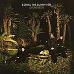 Echo & The Bunnymen Evergreen