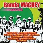Banda Maguey Las Clasicas