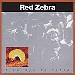 Red Zebra From Ape To Zebra