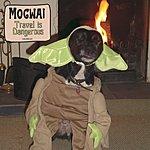 Mogwai Travel Is Dangerous