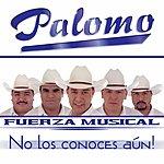 Palomo No Los Conoces Aún
