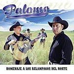 Palomo 15 Memorias De Los Relámpagos Del Norte