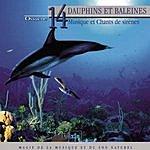 Vincent Bruley Oxygène 14: Dauphins Et Baleines