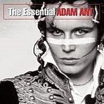 Adam Ant The Essential Adam Ant
