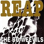 The Bo-Weevils Reap