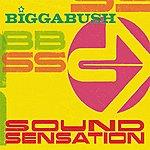 Bigga Bush Sound Sensation