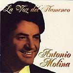 Antonio Molina La Voz Del Flamenco