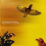 Keco Brandão Music And Nature - Birds