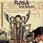 Rose Rosa Das Rosas
