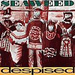 Seaweed Despised