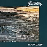 Santana Moonflower
