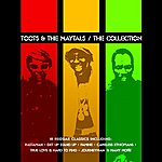 Toots & The Maytals The Collection