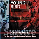 Young Bird Only the Strong Survive: Pow-Wow Songs Recorded Live At The University of Iowa