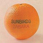 Sunbirds Zagara