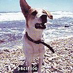 Pacifico Musica Leggera