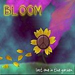 Bloom Last One In The Garden